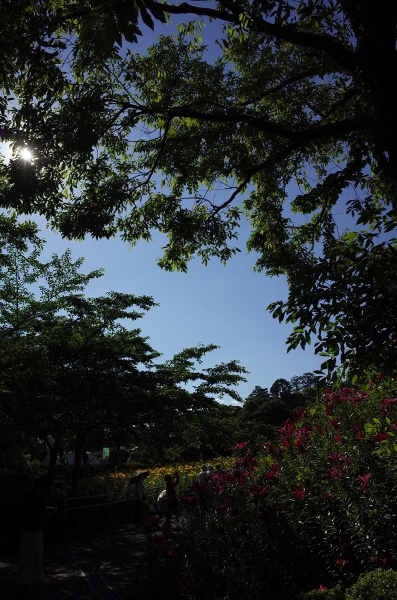 可睡斎ゆりの園の写真